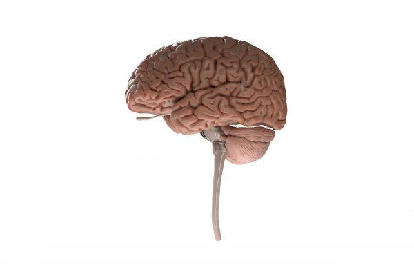 Nervu sistēma