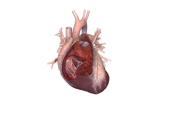 Sirds un asinsrites sistēma
